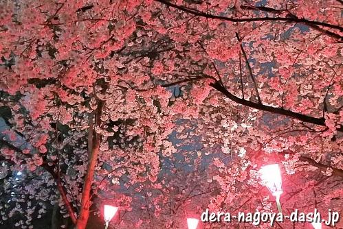 鶴舞公園の夜桜ライトアップ