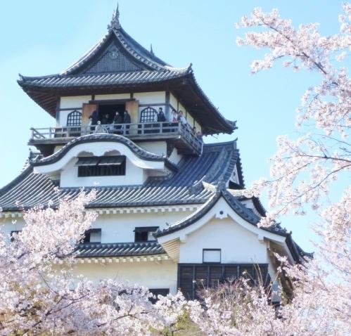 国宝犬山城の桜