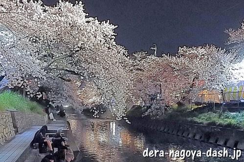 岩倉五条川の夜桜ライトアップ