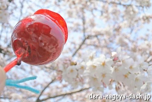 岩倉五条川の桜とりんご飴(岩倉桜祭り)