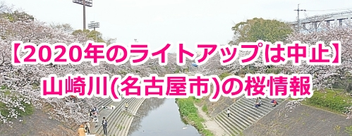 山崎川(名古屋市)の桜情報まとめ(2020年)