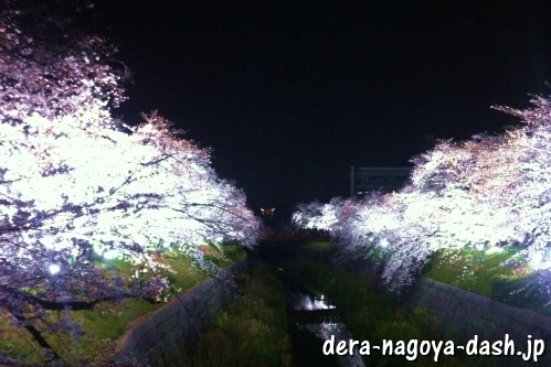 山崎川(名古屋市)の夜桜ライトアップ