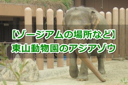 東山動植物園(名古屋市千種区)のアジアゾウガイド