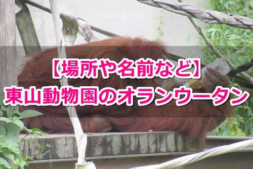 東山動物園(名古屋市千種区)のオランウータンガイド