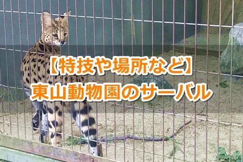 東山動物園(名古屋市千種区)サーバルキャット00