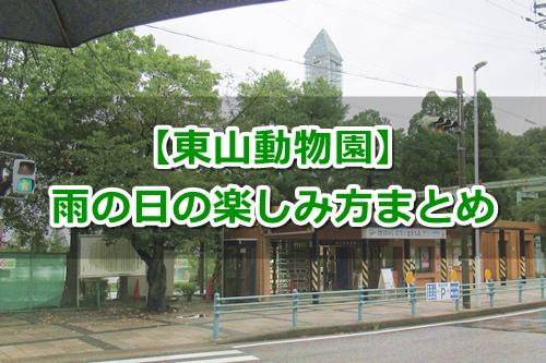 東山動物園(名古屋市千種区)雨の日の楽しみ方ガイド