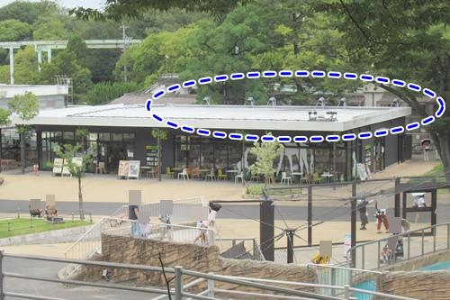 東山動物園(名古屋市千種区)サーバルキャットの場所(食肉小獣舎)