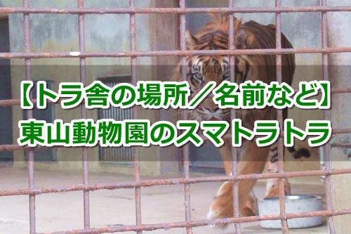 東山動植物園(名古屋市千種区)スマトラトラガイド
