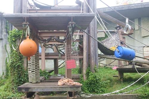 東山動物園(名古屋市千種区)のオランウータン02