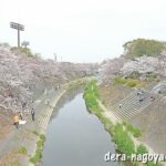 山崎川(名古屋市瑞穂区)の桜並木の場所(地図)