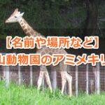 東山動物園(名古屋市千種区)のアミメキリンガイド